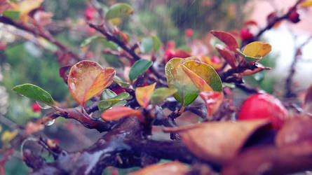 Autumn by Geliana7