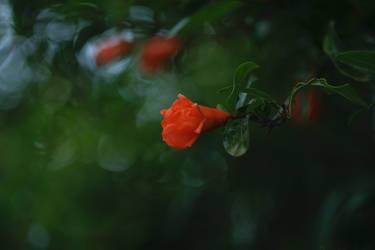 In silence by Geliana7