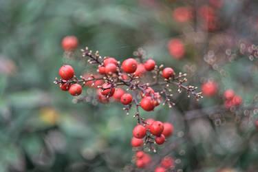 Wild berries by Geliana7