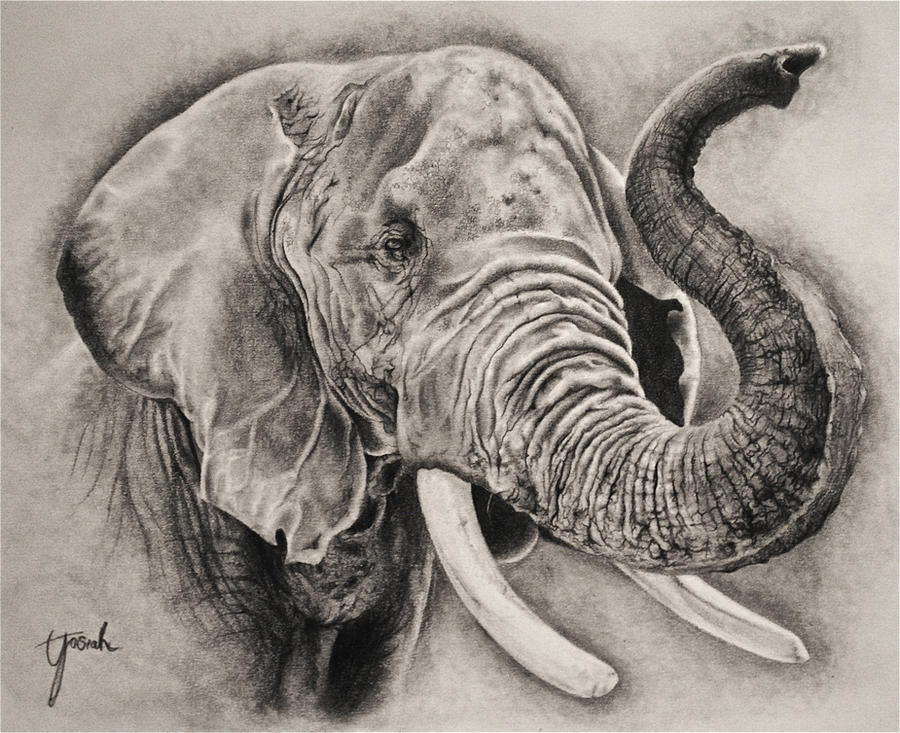 Elephant Sketch by Eriatarka24
