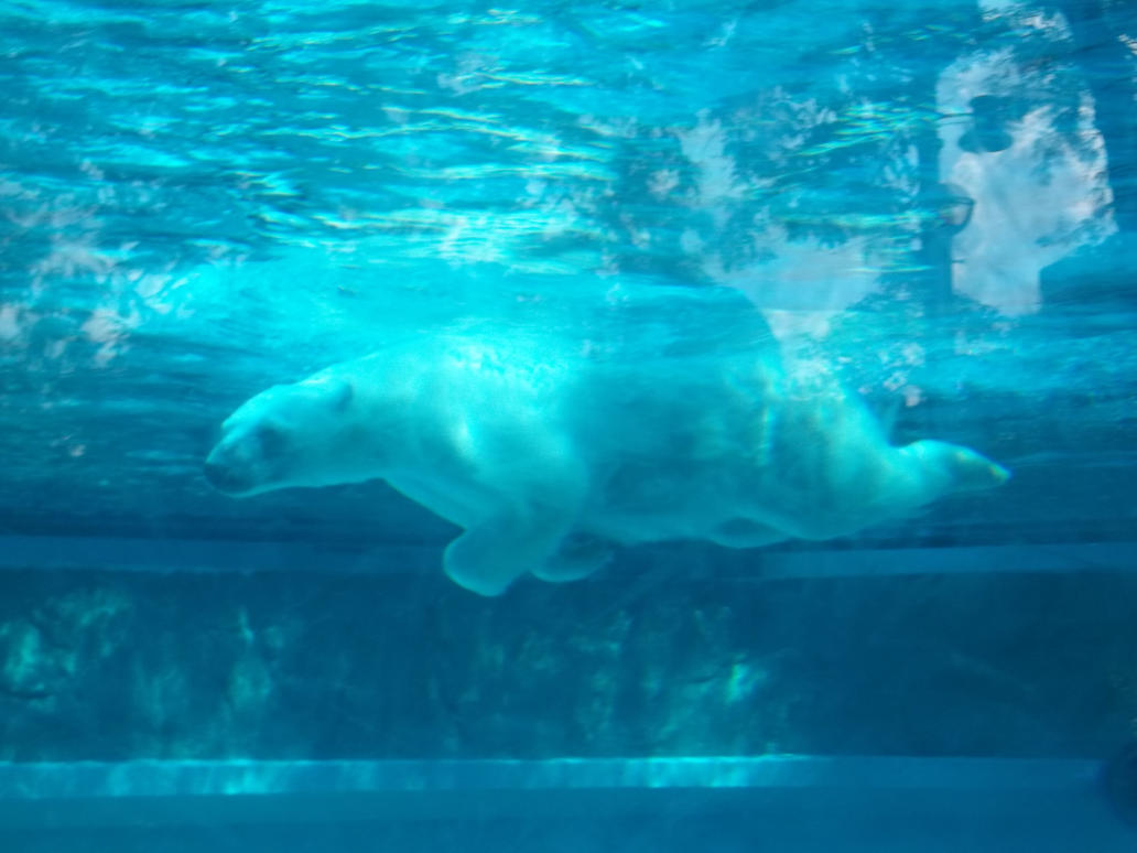 Underwater Polar Bear by MouseMayhem