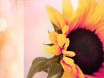 Ancora un sunflower by cridefea
