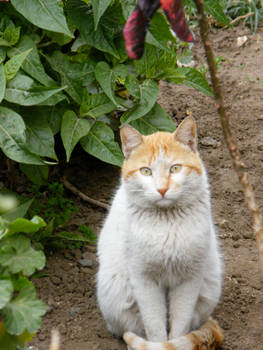 Street cat 1