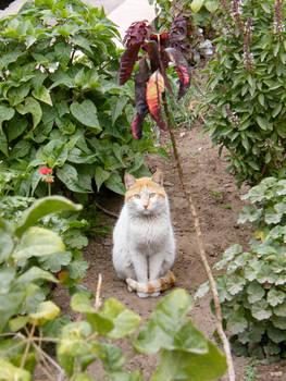 Street cat 2