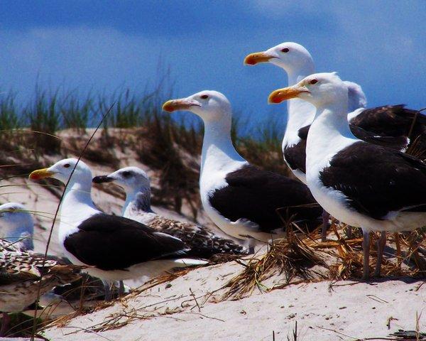 Seagulls by Xercesa