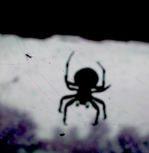 Spider by GaBrIeLlA123