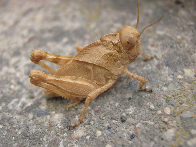 Grasshopper by GaBrIeLlA123
