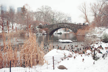 Central Park Winter Ducks
