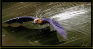 Soaring Over Open Waters