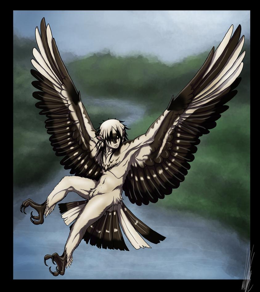 Random The_Harpy_Boy_by_shorty_antics_27