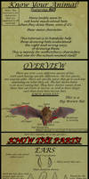 How to Draw Correct Bat Parts on Anthros