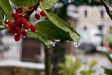 plants and ice by 3otiko