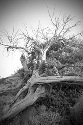 old tree by 3otiko