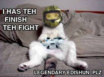 Funny Cat-Halo3