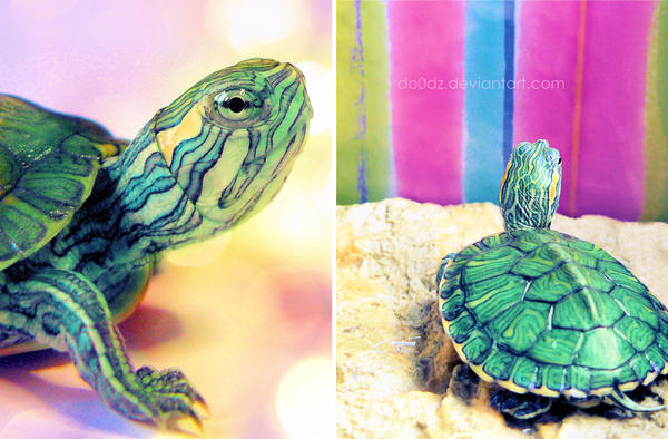 Dia the baby turtle by do0dz