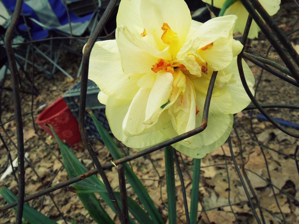 Dah Daffodils Brutha by Dislike-Like