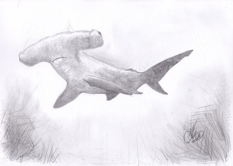 Concept Design Home: Hammerhead Shark Art Pictures