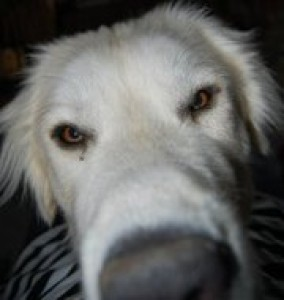 FluffySarcasm's Profile Picture