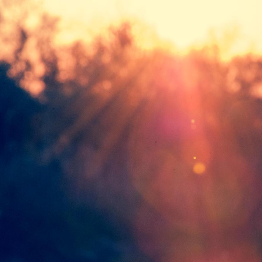 light by carrex