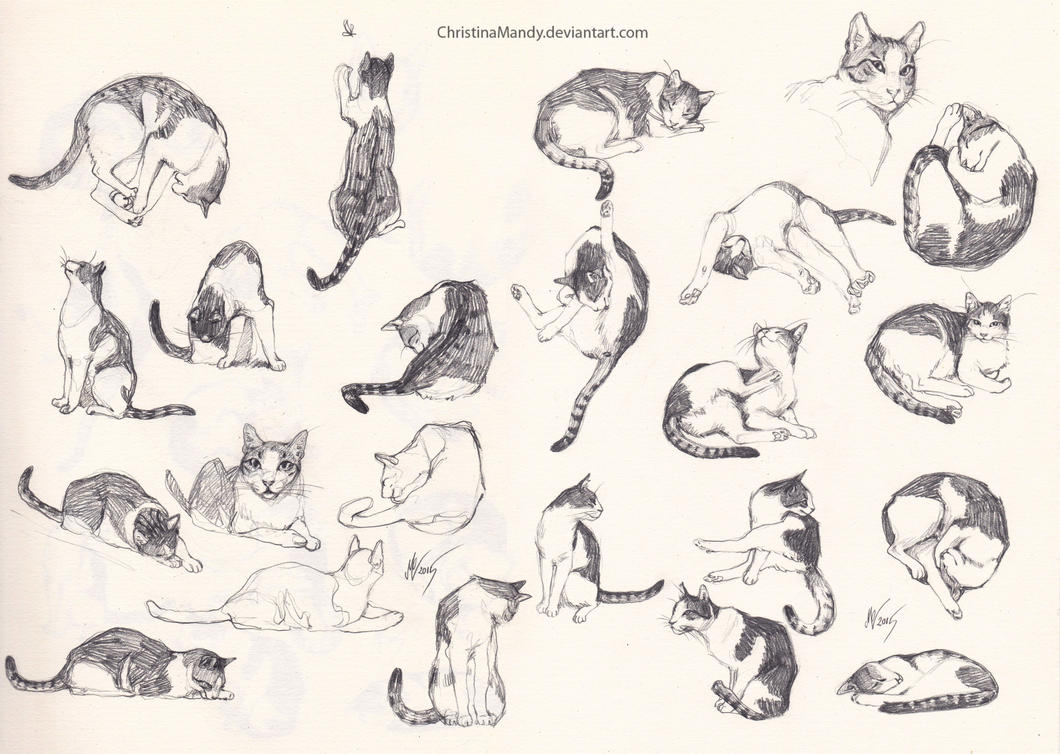 my cat sketches by christinamandy on deviantart