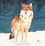 Lonely wolf