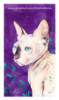 Little Sphynx by ChristinaMandy