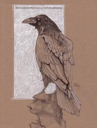 Crow study by ChristinaMandy