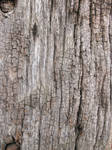 Old Wood texture 3