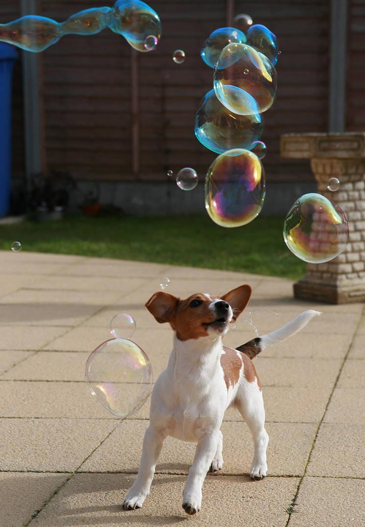 Dog stock 9 by Random-Acts-Stock
