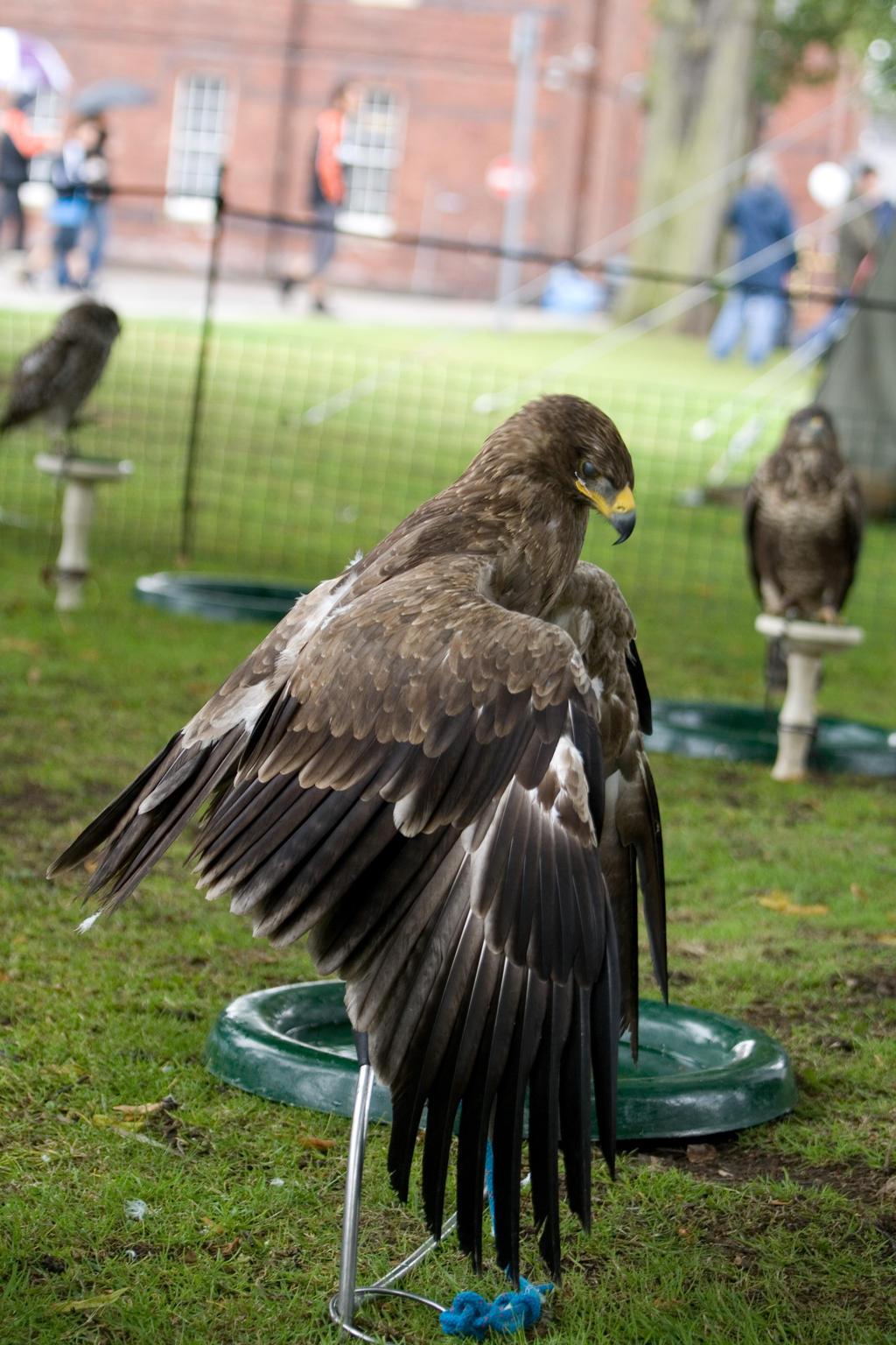Bird of prey 6 by Random-Acts-Stock