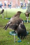 Bird of prey 7
