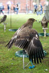 Bird of prey 7