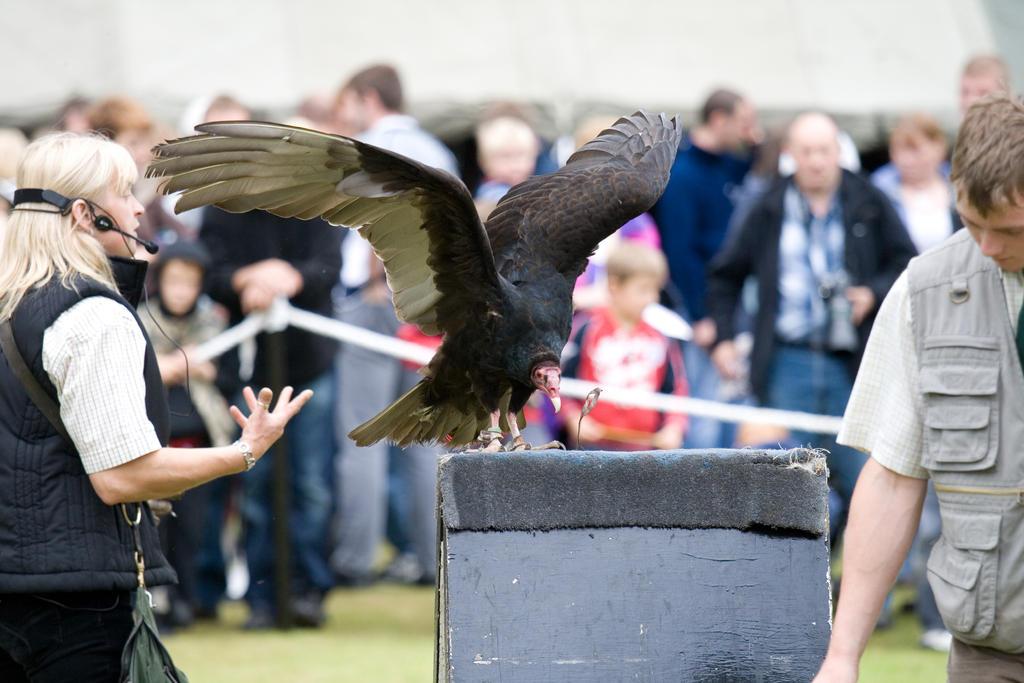 Bird of prey 15 by Random-Acts-Stock