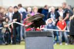 Bird of prey 16