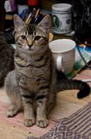 Cat stock 10 by Random-Acts-Stock