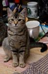 Cat stock 10
