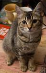 Cat stock 11