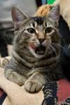 Cat stock 13
