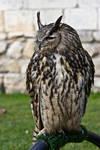 Bird of Prey 21