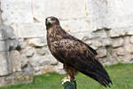 Bird of Prey 22