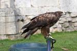 Bird of Prey 24