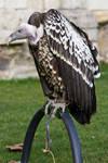 Bird of Prey 27