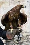 Bird of Prey 28