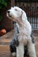 Dog stock 12 by Random-Acts-Stock