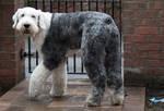 Dog stock 13