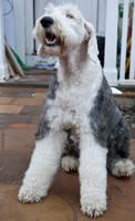 Dog stock 15 by Random-Acts-Stock