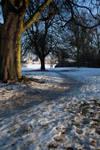 Winter wonderland stock 7