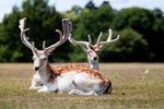 Deer stock 3 by Random-Acts-Stock