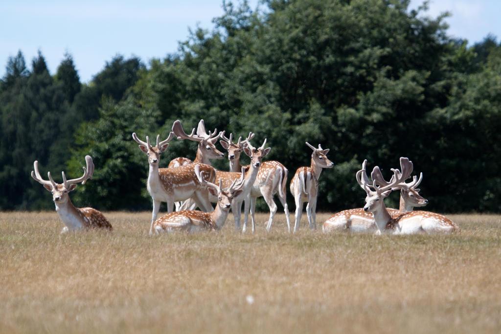 Deer stock 7