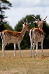 Deer stock 10